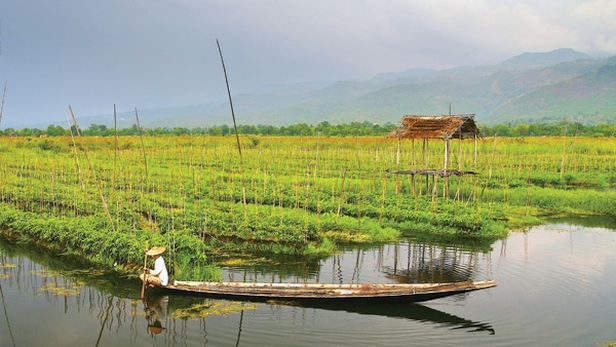 A farmer works from his boat growing vegetables on floating ground beds in Inlay Lake, Myanmar