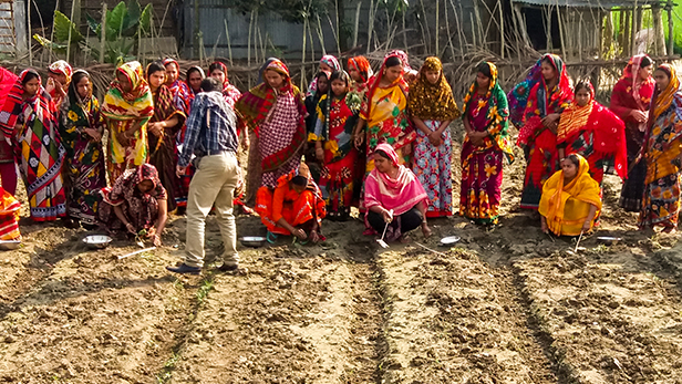Credit: Ishrat Jahan (IFDC). AVPI practical farmer training session