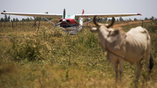 MAF aircraft and cattle at Marsabit airstrip, Kenya. Photo by LuAnne Cadd