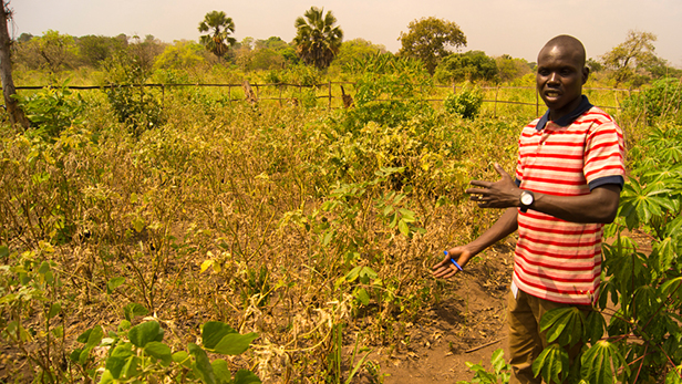 Donald Itti in a demo plot of a Farmer Field School.
