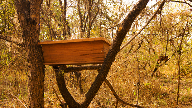 Improved beehives made of wood are provided and monitored by ACTED.